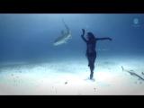 танцует женщина с Тигровыми акулами( они такие лапули и девушка красивая)
