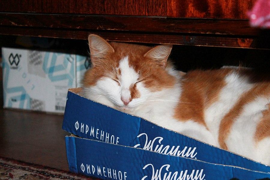 Где спит кошка и почему