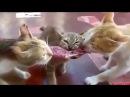 Прикольная видеонарезка про кошек!