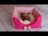 Como fazer uma casinha, caminha ou Cabaninha para cachorro ,gato ! Com Arte de Paninho