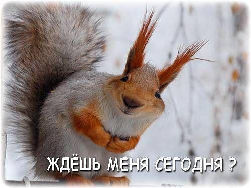 http://pp.vk.me/c622419/v622419245/37740/9QolBu0yV2c.jpg