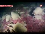 Находка тысячелетия огромный античный корабль обнаружен на дне моря в Крыму  Размер 11.77 Mб Код для вставки в блог        Опу