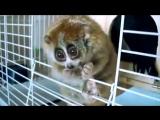 Лори-самые милые животные в мире