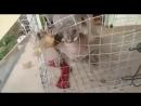 ЖЕСТЬ: Чупакабра поймана в Китае #эксклюзив