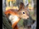 Дикая природа. Слушаем голоса животных.