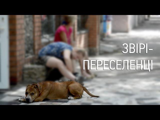 Звірі-переселенці: в Бердянську знаходять притулок тварини з зони АТО