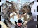 Крестовый Туз Волки
