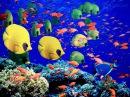 Красивый отдых - Египет. Подводный мир Шарм эль шейх - отдыхал здесь, плавал, нырял. И маме (Людмила Стоялова) привез воды с Красного моря. Макс Стоялов