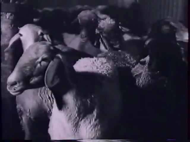 Адонис XIV - Козел ведущий на убой