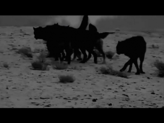 NARGAROTH-AMAROK-Zorn Des lammes lll(w.lyrics)