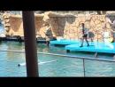 выступление в дельфинарии