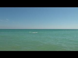 дельфин 3.MTS