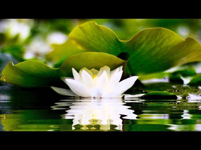 2 HOURS of BEST Buddha Meditation Song ♥ Buddhism Music, Buddhist Songs, Zen Music, Yoga Music