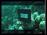 Предельная глубина - 293 - Египет. Морские заповедники.