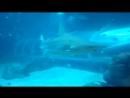 S.E.A Aquarium, shark.