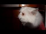 Коту мало еды: говорящий питомец русским языком просит кормить его больше