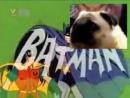 Batman dog (Мопс вызывает Бэтмена)