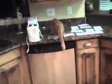 Как отучить кошку лазить на стол. Смешное видео с животными 2013