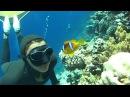 Мир подводной охоты - Египет глазами подводного охотника.