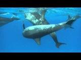 Принцип дельфина. Dolphin Principle