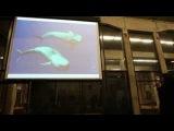 Уроки дельфиньего. Александр и Николь Гратовски