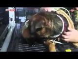 В США спасли собаку, пробегавшую два месяца с кувшином на голове