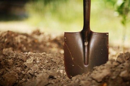 Способы определения кислотности почвы самостоятельно. Растения для кислой почвы