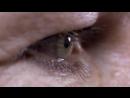BBC Путешествие человека Human Journey 3 Азия