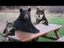 Даже животные спасают друг друга.