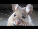 ТОП 10 Ужасные Спаривания Животных в сравнении с Человеком (HD)