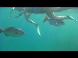 Варадеро под водой