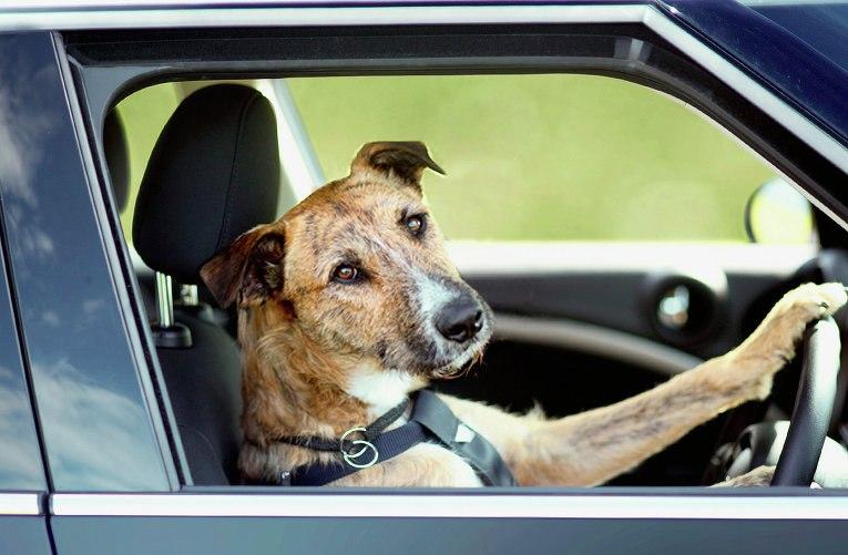 Подборка Аварии и ДТП. Собаки и голуби умнее людей.