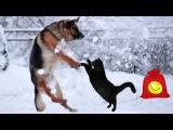 Собаки и кошки играют в cнегу. Забавные животные (сборник)