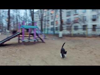 Коты против квадрокоптера Cats vs quadcopter