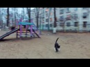 Коты против квадрокоптера Cats vs quadcopter