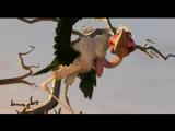 Замбезия Zambezia.2012.DVD5VTS_02_1_xvid