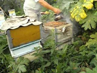 зажимаем матку на одном корпусе, для увеличения выхода товарного меда в семье пчел