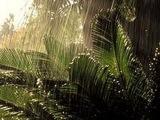 Волшебные звуки природы - Звуки дождя, гром и молния и щебетание птиц в лесу. Красиво!!!