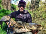 Wels catfish on lure! (siluro a spinning)
