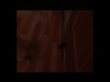 как кошка охотится на пояс халата