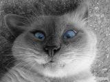 Кошки, смешные животные, прикольные кошки, самое смешное, приколы, ржач, угар, ахахах #пуговки #рукоделие