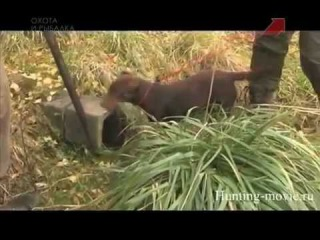 Записки великого охотника Ягдтерьер