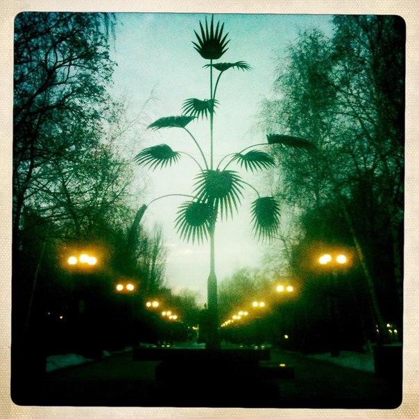 Пальма на бульваре
