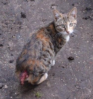 Кот оторвал хвост