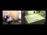 Death Metal Rooster ft. Drumming Washing Machine