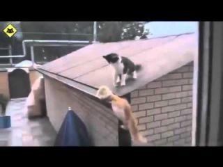 Смешные видео про кошек и котят