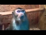 Хохма! Обиженная на весь мир обезьяна Приколы с животными youtube original