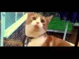 Самые смешные приколы с котами 2013 САМЫЕ СМЕШНЫЕ КОТЫ 1 HD