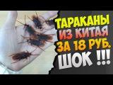 БУГАГА ) Тараканы из Китая за 18 рублей. - buyincoins.ru посылка 2015 !