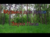 Nature Sounds of the Wood, birds singing - 2 hours of Sleep or Relax on Nature